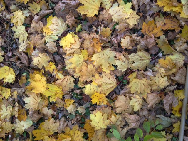 Autumn is the season to make sure you won't have septic issues when the Freeze strikes!